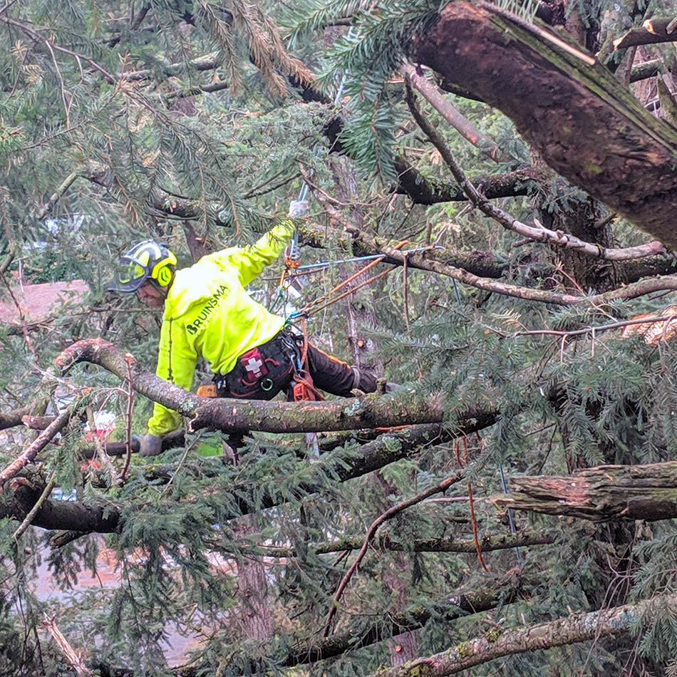 Tree Pruning Services